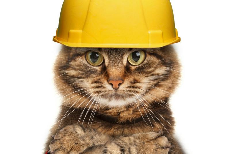 Кот-строитель