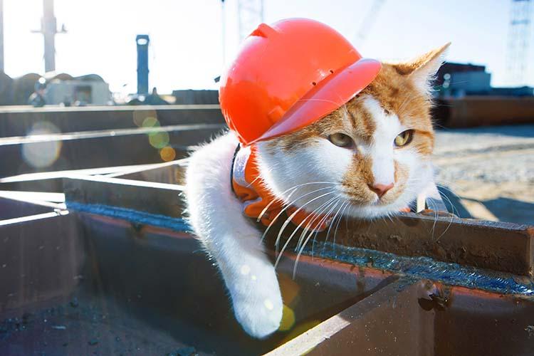 Грустный строитель (кот в каске)