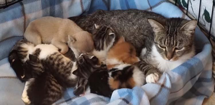 Многодетная семья котов